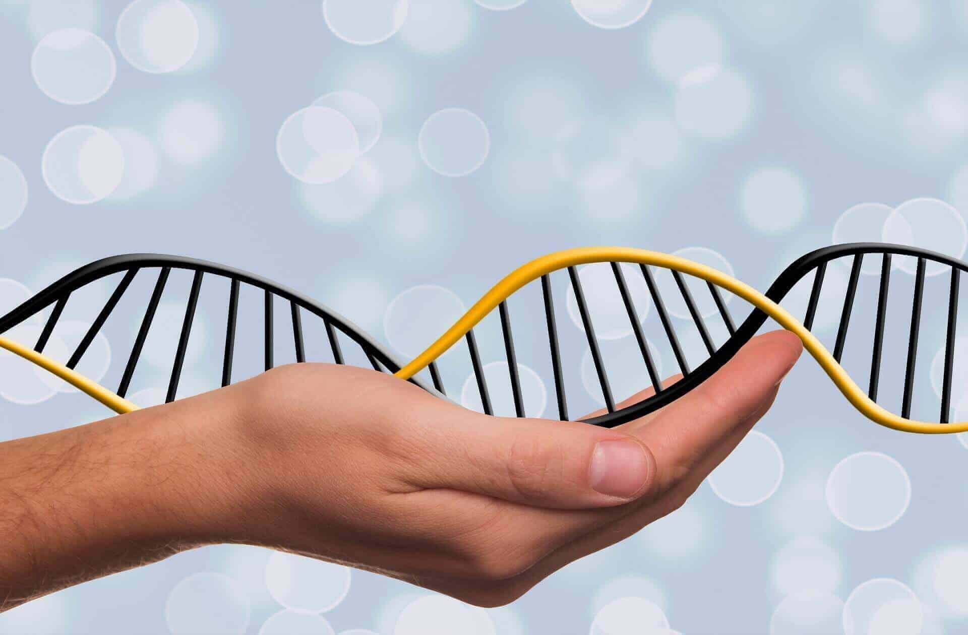 How to analyze your DNA raw data