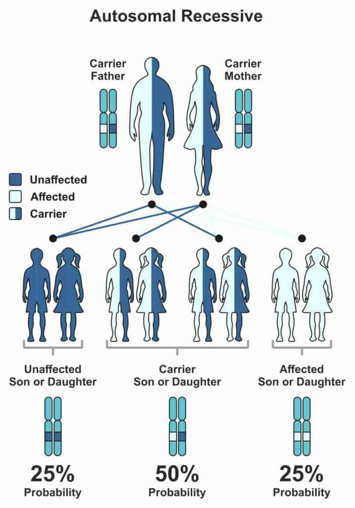 Analyze Your DNA Raw Data For Glycogen Storage Disorder